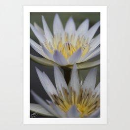 The Queens Blue Lilies  Art Print
