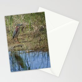 Green Heron on Water's Edge Stationery Cards
