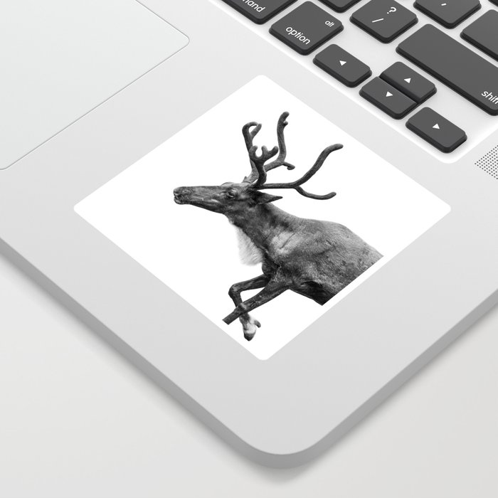 Animal Photography | Reindeer Minimalism | Antlers Christmas | Rudolf Sticker