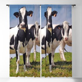 Young Holstein cows Blackout Curtain