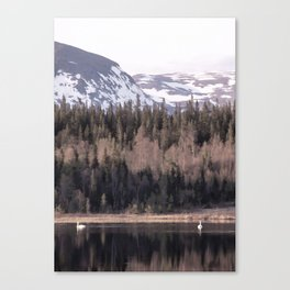 Pair of swans Canvas Print