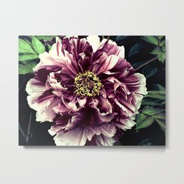 Peony Flower A103 Metal Print