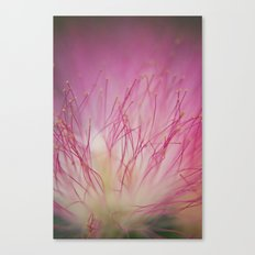 Mimosa Bloom Canvas Print