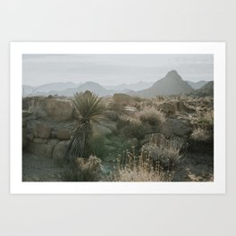 Joshua Tree National Park at Sunrise Art Print