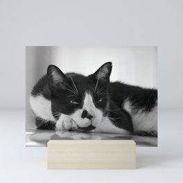 Cat's Look Mini Art Print