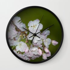 Saratoga Cherry Blossoms Wall Clock