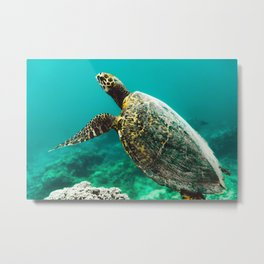 Snorkeling with Turtles. Metal Print