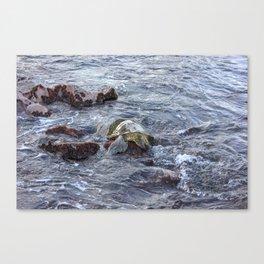 turtlebutt Canvas Print