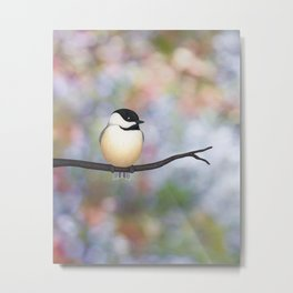 black capped chickadee on a branch Metal Print