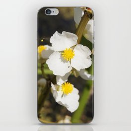 Arrowroot bloom iPhone Skin