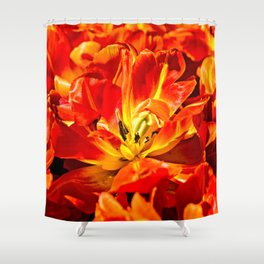 Macro view of red tulips Shower Curtain