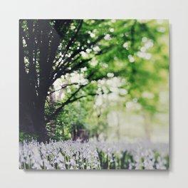 Bluebell Fields. Metal Print