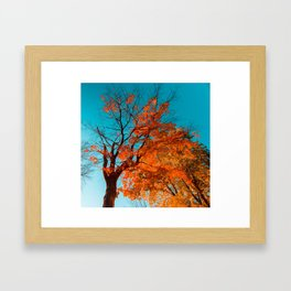 Autumn Cyan Framed Art Print