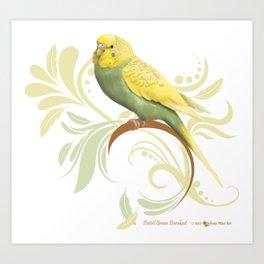 Pastel Green Parakeet Art Print