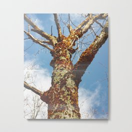 Orange Mushroom Tree Metal Print