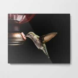 Ruby Throated Hummingbird at the feeder in Wisconsin Metal Print