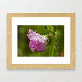 Flower in the Rain Framed Art Print