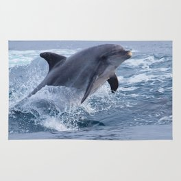 Bottenose dolphin Rug