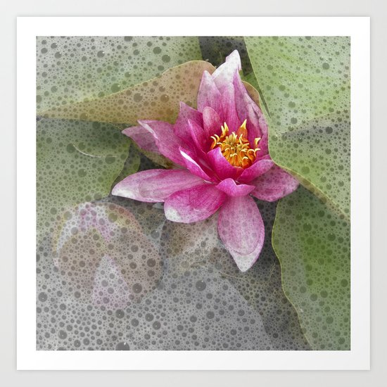 soft water lily IV Art Print