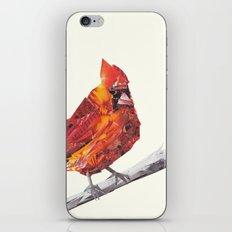 Red Cardinal Bird Collage iPhone & iPod Skin