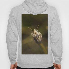 A beautiful bug Hoody