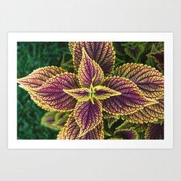 Plant Patterns - Coleus Colors Art Print
