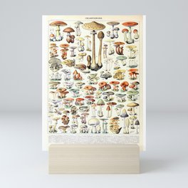 Adolphe Millot - Champignons B - French vintage poster Mini Art Print