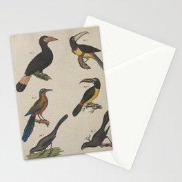 Panayan Hornbill Arakari Toucan Brasilian Motmot Green Toucan Cinereous Wattle Bird Lesser Ani13 Stationery Cards