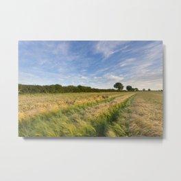 Field of Barley Metal Print