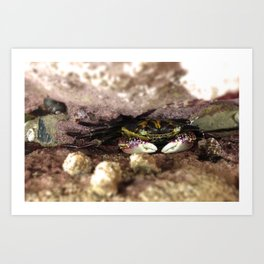 Crab in a Crevice  Art Print