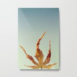 Acer Palmatum Leaf Metal Print