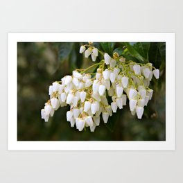 White Bells Art Print