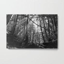 Sunrays Through the Trees Metal Print
