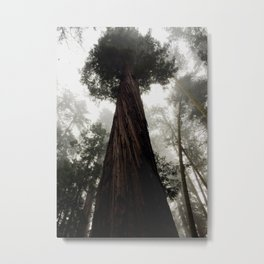 Fairy Tale Redwood Metal Print