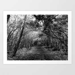 Desolate // Aokigahara  Art Print