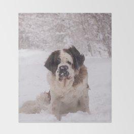 St Bernard dog on the snow Throw Blanket