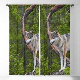 Wolf Looks Prey Pack Attacks Predator Blackout Curtain