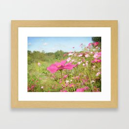 Cosmos in the field Framed Art Print