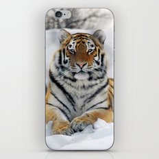 Tiger in snow iPhone & iPod Skin