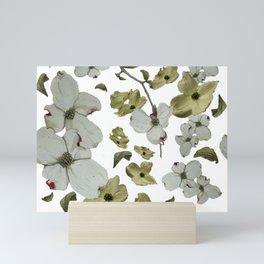 Dogwood Pedals on White Mini Art Print