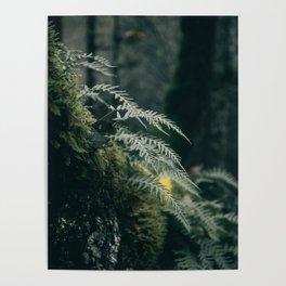 Ferns VII Poster