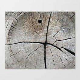 dry wood branch Canvas Print