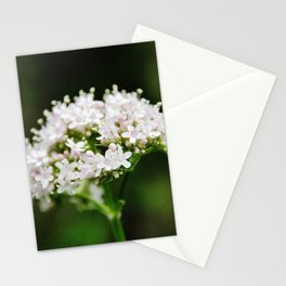 Tiny white garden flowers Stationery Cards