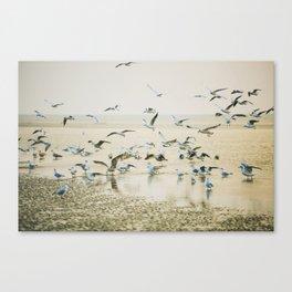 My heart beats in a million gulls Canvas Print