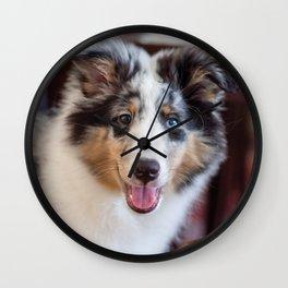 Cute Sheltie puppy smile Wall Clock