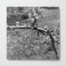 tree branch with Flowers Metal Print