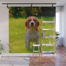 beagle puppy on guard Wall Mural