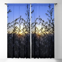 Pacific Coast Sunset Through the Trees at Torrey Pines State Beach, California - Color Photo Blackout Curtain