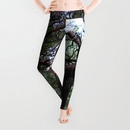 fairytale Leggings