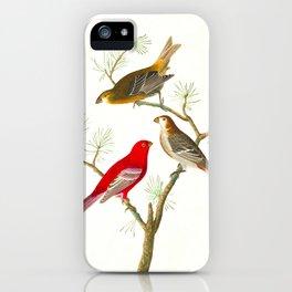 Pine Grosbeak Bird iPhone Case